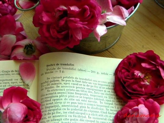 serbet de trandafiri1