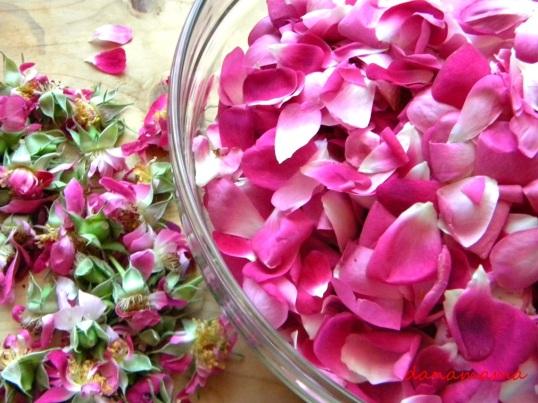 serbet de trandafiri2